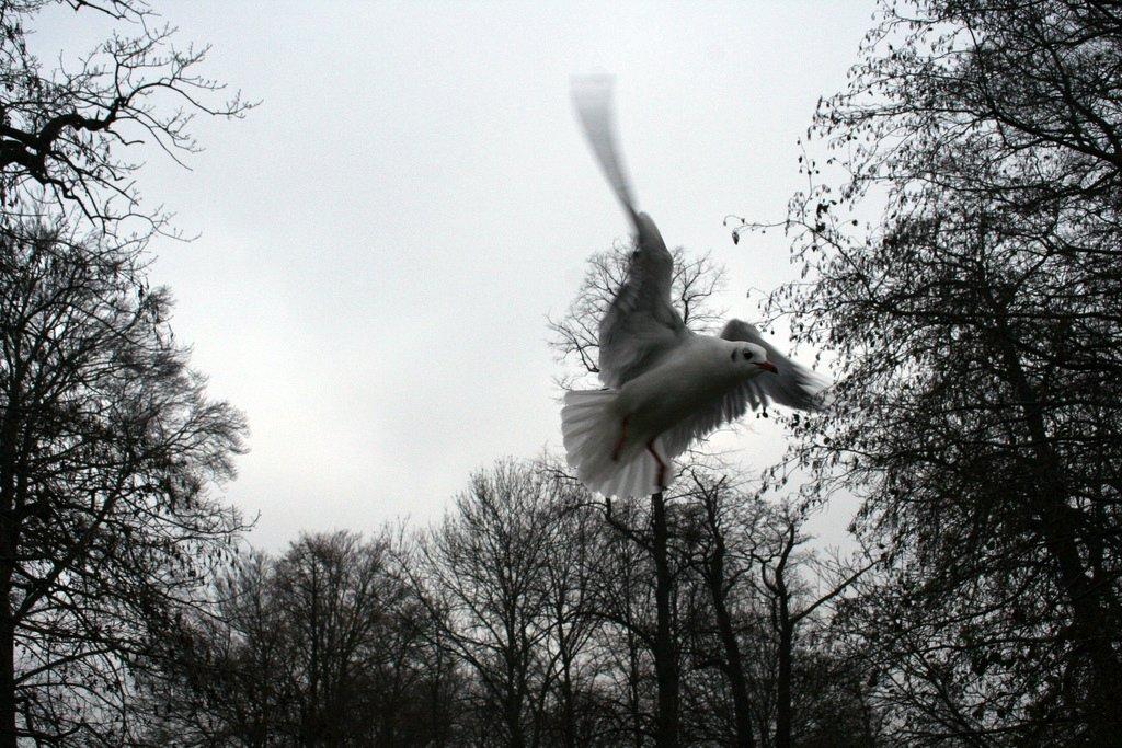 Måge i Roskilde
