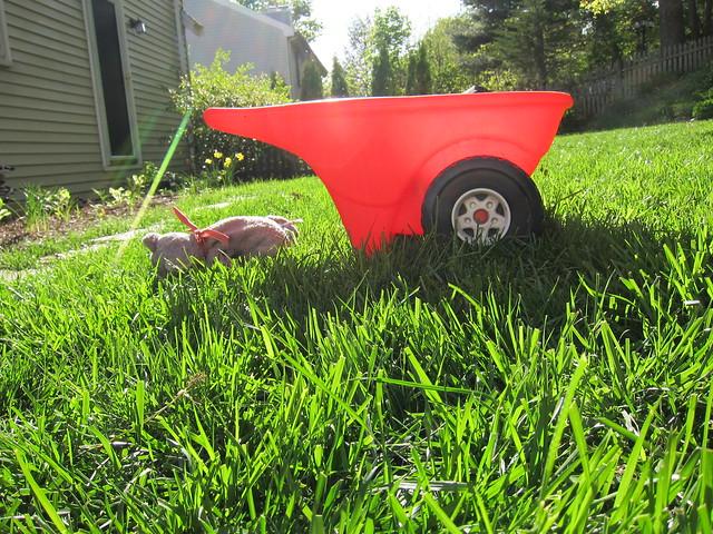 Wheelbarrow in the sun