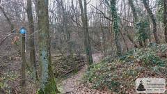Waldpfad