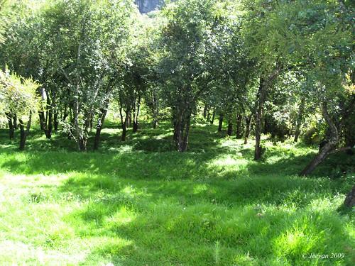 the pear garden