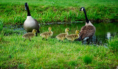 Follow the Leader (Anthony Morrone) Tags: nature photo morrone