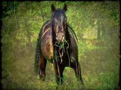 Elemental...... (Guy Wulf) Tags: horse texture fields stallion blackhorse equine banham
