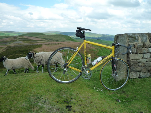 Bike and Sheep