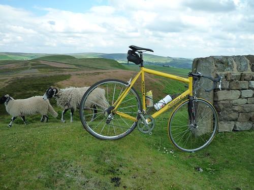Bike and Sheep