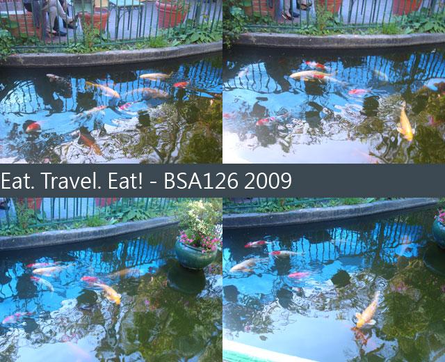 Fish-Pond-1