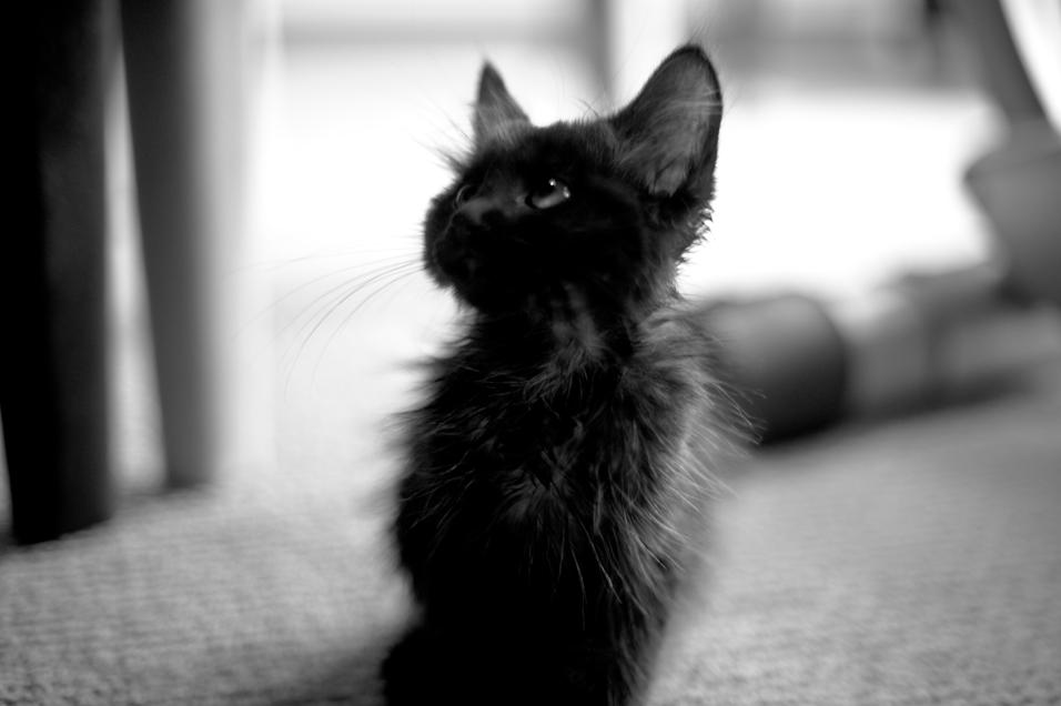 Tiny, Scrawny & Cute