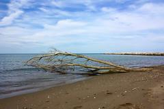 solitary beach #1 (]babi]) Tags: blue sea beach sand mare branch blu lonely solitary ramo spiaggia sabbia solitaria