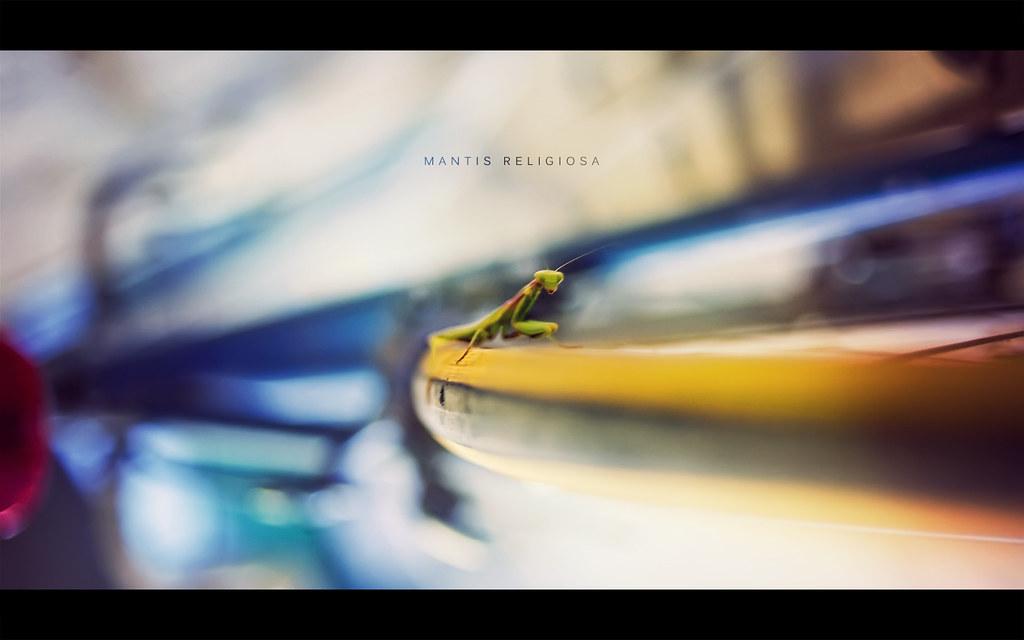 Mantis Religoiosa