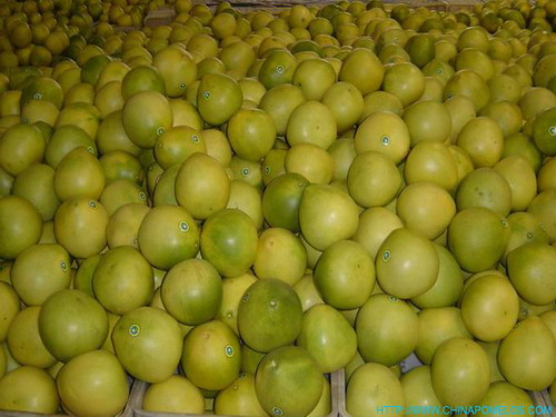 chinese honey pomelos