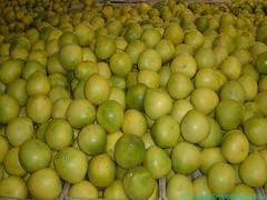 Chinese honey pomelo fruit: Pomelo fruit harvesting