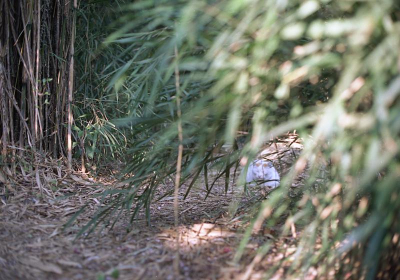 野生の白猫