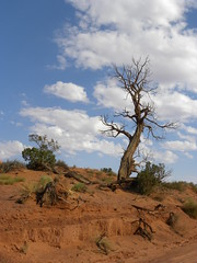 Tree On A Hill--Monument Valley (hiddentravel) Tags: trees nature landscape outdoors navajo monumentvalley rockformations