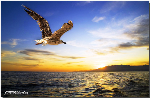 Volando al Ocaso