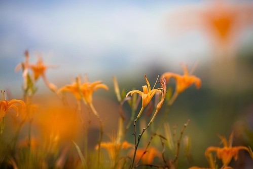 20090906-IMG_3115 by you.