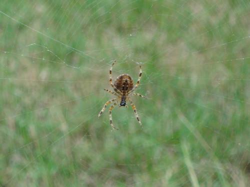 Hello, Mister Spider
