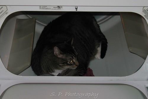 Wonder cat in the dryer