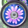 BUGA 2009 Schwerin (Marco Braun) Tags: flower art wheel circle square rad squaredcircle blume 2009 cercle carré buga quadrat kreis schwerin fleure