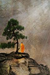 silence (AlicePopkorn) Tags: light photoshop creativity energy digitalart monk silence bonsai meditation awareness spiritual magical stillness consciousness oneness alicepopkorn groundofbeing