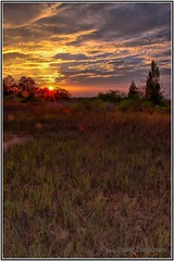 Marsh Grass at Sunset... (Paul Pagano) Tags: sunset color nature beauty grass landscape florida marsh hdr mayport paulpagano tamron1750f28 anawesomeshot canon40d ndgradfilters