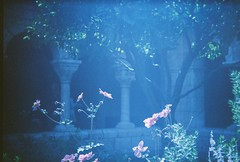 Flowers in the Courtyard (LindySlav) Tags: nyc thecloisters holga135
