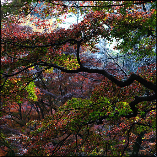 The wonders of autumn in Japan; Todoroki Ravine, Tokyo