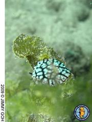 sea slug 2