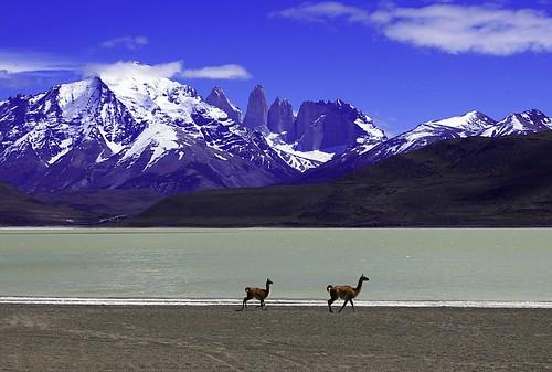 フリー画像| 動物写真| 哺乳類| ラマ| 山の風景| 湖の風景| チリ風景|     フリー素材|