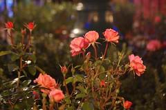 Disneyland_2011 095