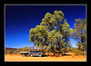 In the Australian Outback (elc13600) Tags: australia australie outback bush northernterritory desert nature wild sauvage vierge car voiture gumtree awesometrees tree arbre eucalyptus 44 red rouge centrerouge