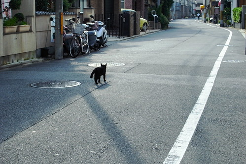 Today's Cat@20090629
