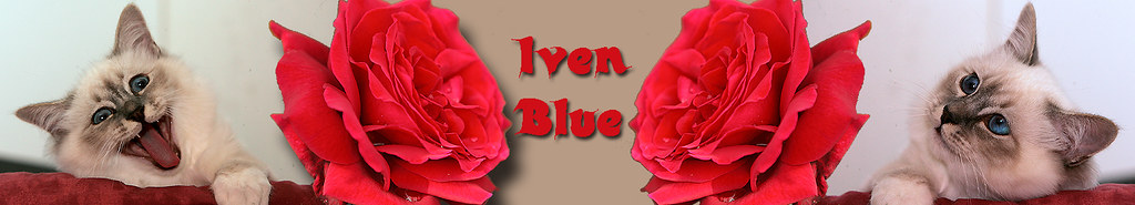 _jpg-15.07.09-Banner-Iven-B