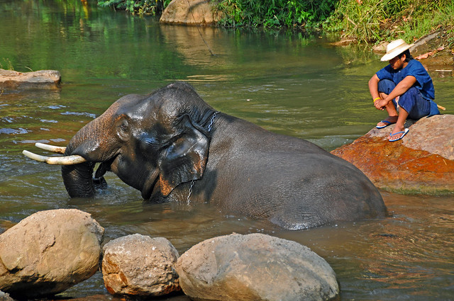 Thailand Elephant Jungle