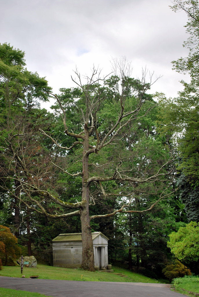 Creepy Sleepy Hollow Cemetery Tree