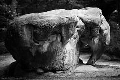 L'lphant de Barbizon (flo74.) Tags: blackandwhite bw elephant france animal stone forest canon 50mm noiretblanc stones nb f18 rocher fort fontainebleau eos20d seineetmarne lphant barbizon photophiles rocherdellphant