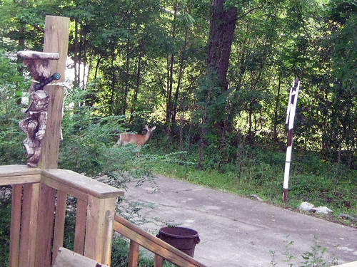 Bambi sees me...
