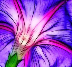 Morning glory becomes electric (JoelDeluxe) Tags: flowers newmexico nm joeldeluxe fractalius stopmeimflyingtooclosetothesun