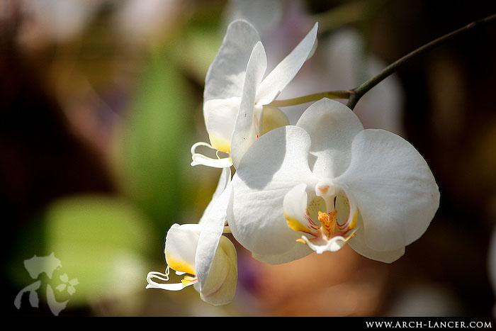P_flower10