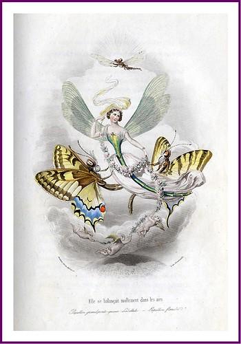 008-Les Papillons, métamorphoses terrestres des peuples de l'air- Pierre Amédée Varin