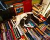 (nilgun erzik) Tags: istanbul taksim kedi sahaf fotografkıraathanesi velvetpaws fotografca biyerlerde kitapçılar kediyavruları eylul2009 yazhalabitmedi