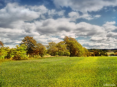 Beautiful day (Bessula) Tags: sky color tree field clouds landscape corn sweden natur colorphotoaward bessula however~itsstillmylife