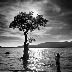 Tree Swimmers (Southside Images) Tags: uk sun tree water sunshine bay scotland rays loch swimmers lomond lochlomond milarrochybay milarrochy alwaysexc