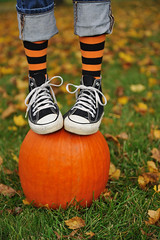 Happy Halloweenie Bench Monday (Theresa Thompson) Tags: orange black halloween pumpkin explore chucks chucktaylor stripeysocks hbm benchmonday
