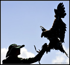 Eagle and Man (t.klick) Tags: austria sterreich eagle adler predator pongau greifvogel greifvogelschau flugvorfhrung festunghohenwerfen