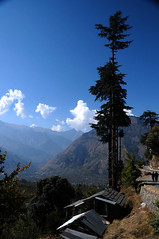 Jana Village (Koshyk) Tags: blue sky cloud heaven bluesky huts jana manali pinetrees himachal heavenonearth whiteclouds kais deor himalayanvillage beautifullandscape deodar manalivacation blueskiesinhimalaya corporatesorchardparkkais manaliresorts