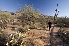 IMG_9658 (simon_travelboy) Tags: arizona tucson saguaronationalpark