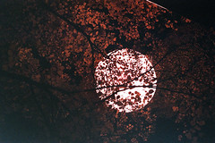 / (Luca Bendandi) Tags: trees light moon love night falling huge moonlight