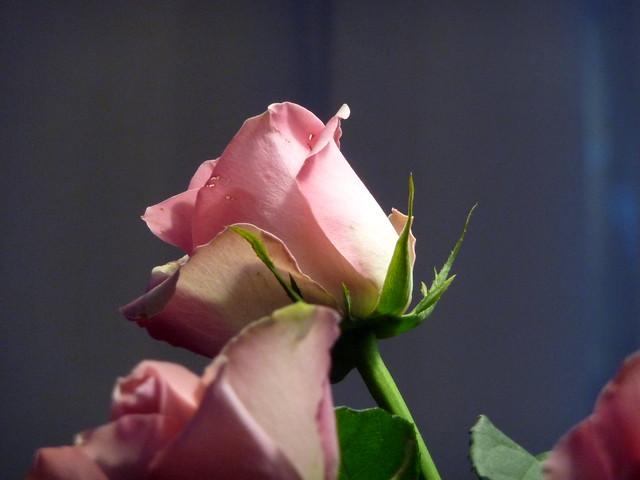 Up she rose