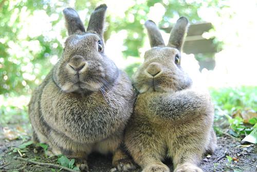 Two Rabbits / Zwei Kaninchen