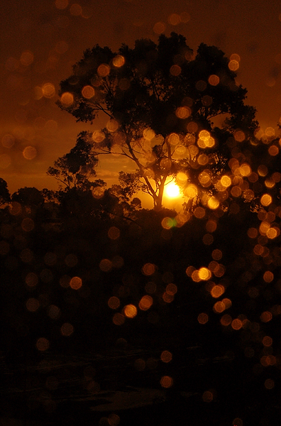 _after_the_rain_