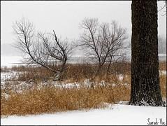 (Sarah-Vie) Tags: winter nature hiver paysage savebeautifulearth